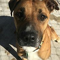 Adopt A Pet :: Nikey - Hanna City, IL