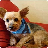Adopt A Pet :: Scooby - Gulfport, FL