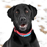 Adopt A Pet :: Duke - Cheyenne, WY