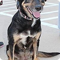 Adopt A Pet :: Ella - Justin, TX