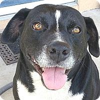 Adopt A Pet :: Lex - Orlando, FL