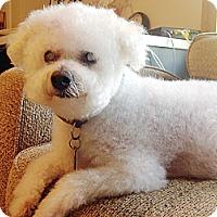 Adopt A Pet :: CASPER #2 - East Hanover, NJ