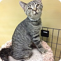 Adopt A Pet :: Snazzy - Byron Center, MI