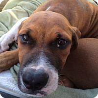 Adopt A Pet :: Hudson - Tampa, FL