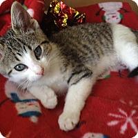 Adopt A Pet :: Charlotte - Island Park, NY