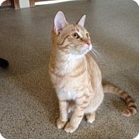 Adopt A Pet :: Larry - Simpsonville, SC