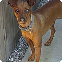 Adopt A Pet :: Claire - Oceanside, CA