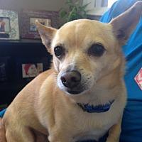 Adopt A Pet :: Ziggy - Ardmore, OK