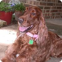 Adopt A Pet :: Maggie Mae - Aledo, TX