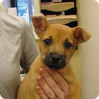 Adopt A Pet :: Lightning - Charlemont, MA