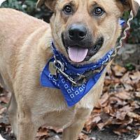 Adopt A Pet :: Remus - Oakland, AR