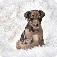 Adopt A Pet :: Colton - Groton, MA