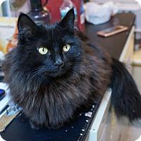 Adopt A Pet :: Zookie - Albany, NY