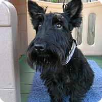 Adopt A Pet :: Sima *PENDING!* - Dallas, TX