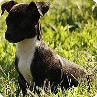 Adopt A Pet :: Skylar - Washington, DC
