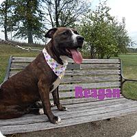 Adopt A Pet :: Reagan - Bucyrus, OH