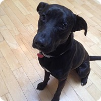 Adopt A Pet :: Cooper - Lebanon, ME