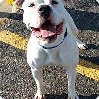 Adopt A Pet :: Georgia - Lisbon, OH