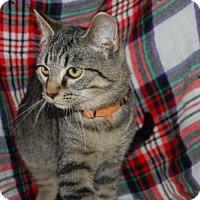 Adopt A Pet :: Paulie - South Haven, MI