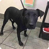 Adopt A Pet :: PRINCESS - San Antonio, TX