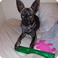 Adopt A Pet :: Macy - Smithfield, NC