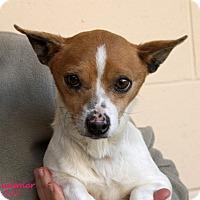 Adopt A Pet :: Summer - Santa Maria, CA