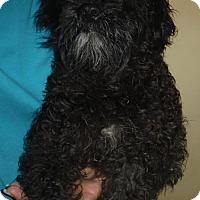 Adopt A Pet :: Katie - Flanders, NJ
