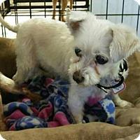 Adopt A Pet :: Pegasus - Mukwonago, WI