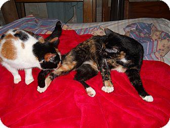 Calico Cat for adoption in Winder, Georgia - *Mimi