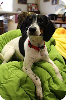 Terrier (Unknown Type, Medium)/Hound (Unknown Type) Mix Dog for adoption in Marietta, Georgia - Snoopy