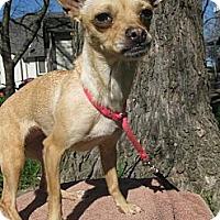 Adopt A Pet :: MISU - Elk Grove, CA