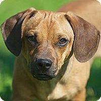 Adopt A Pet :: Beasley - Providence, RI