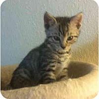 Adopt A Pet :: Trevor - Davis, CA