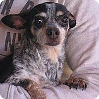 Adopt A Pet :: Donna - Salem, NH