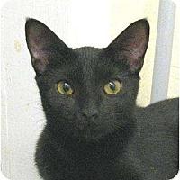 Adopt A Pet :: Luna - Metairie, LA