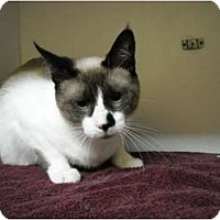 Adopt A Pet :: Taylor - Arlington, VA