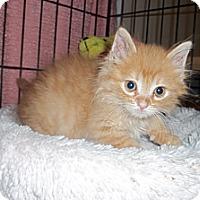 Adopt A Pet :: Crunch - Acme, PA