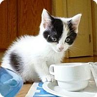 Adopt A Pet :: Callie - Kirkwood, DE
