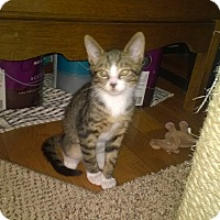 Adopt A Pet :: Harold - Speonk, NY