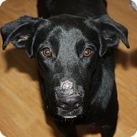 Adopt A Pet :: Lexi - Marion, AR