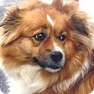 Adopt A Pet :: Trinity