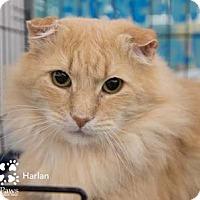 Adopt A Pet :: Harlan - Merrifield, VA