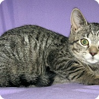 Adopt A Pet :: Wellington - Powell, OH