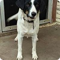Australian Cattle Dog/Terrier (Unknown Type, Medium) Mix Dog for adoption in Hamilton, Texas - Lucy