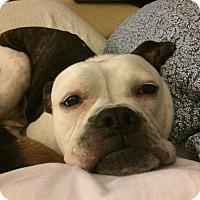 Adopt A Pet :: Rocco - Nashville, TN
