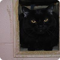 Adopt A Pet :: Ho-Ho - New Castle, PA