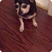 Adopt A Pet :: Emilio - Wallingford Area, CT