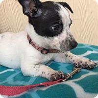 Adopt A Pet :: CARINA - Elk Grove, CA