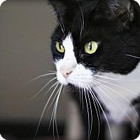Adopt A Pet :: Sylvia - Lincoln, NE