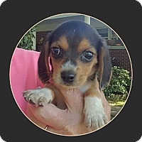 Adopt A Pet :: Lilo~adopted! - Glastonbury, CT